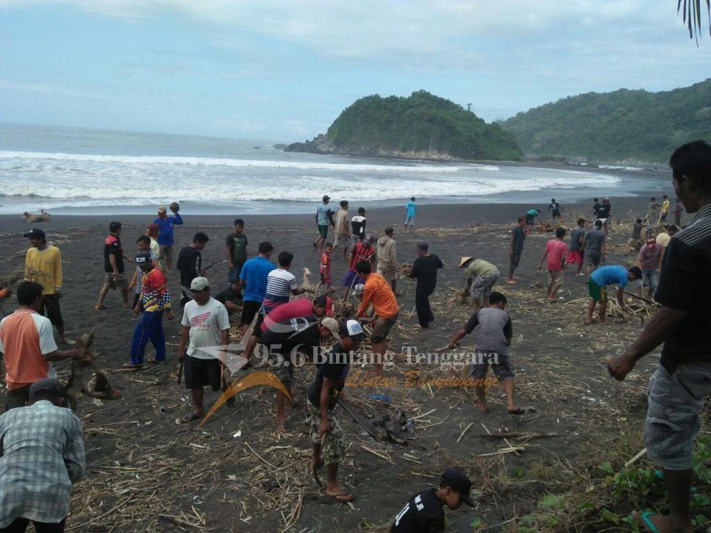 Ratusan warga dan TNI saling bahu membahu membersihkan tumpukan sampah di Pantai Lampon Pesanggaran. (Foto. Rendra)